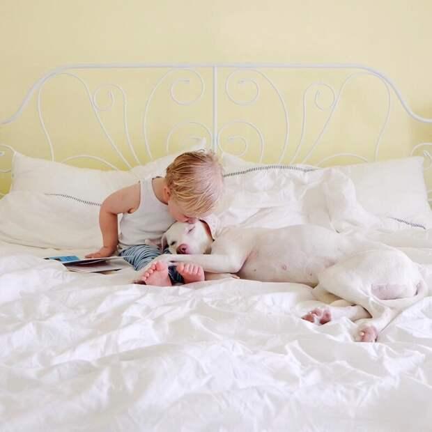 Собака, которая перестала доверять людям, очень подружилась с маленьким ребенком людям