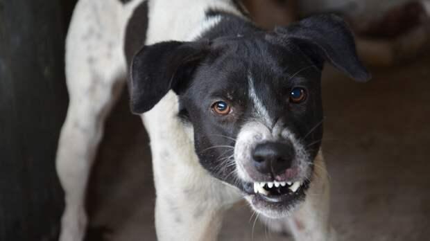 Ветеринар дал советы по профилактике бешенства у животных