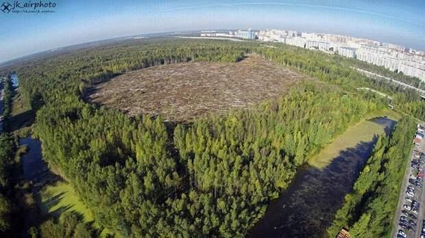 В Приморском районе Петербурга массово вырубают деревья под изначально провальные проекты