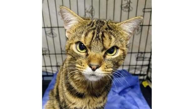 Волонтеры спасли кота с сердитым лицом. Он оказался милашкой