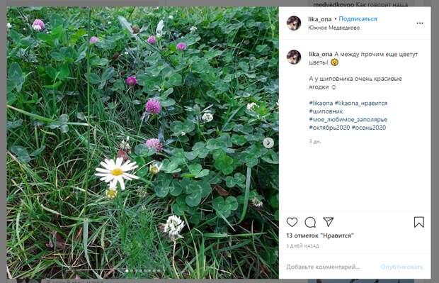Фото дня: в Медведкове распустились цветы в октябре