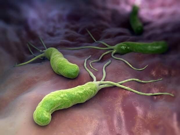 лекарственные травы для лечения желудка