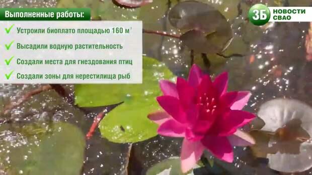 Видео: на Ясном пруду зацвели кувшинки
