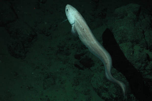 Интересно о рыбах