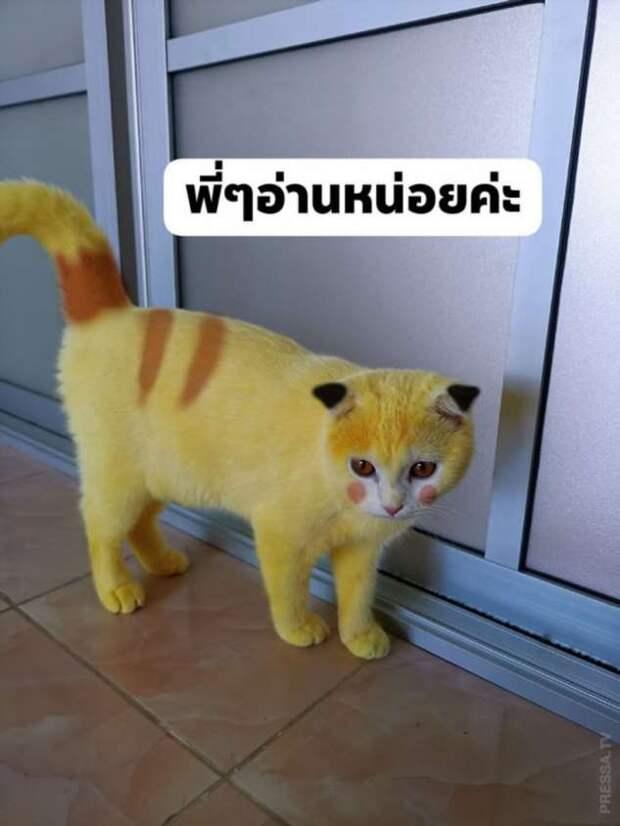 После лечения куркумой кот стал желтым