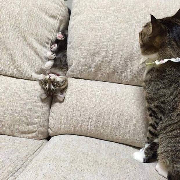 """""""Это фиаско, котан!"""" Животные попали в передрягу, но им не стыдно! С кем не бывает? :)"""