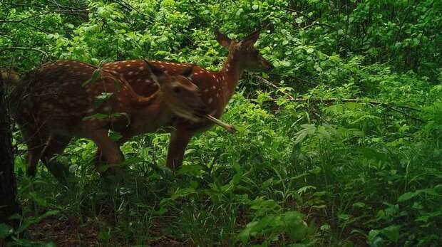 Эти снимки с фотоловушек удивили даже опытных зоологов