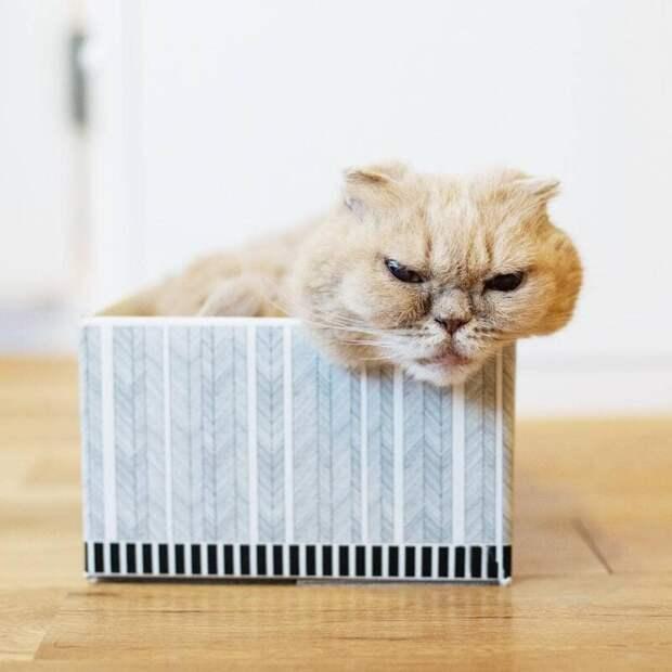 Это Фуку, и с ним тоже лучше не связываться животные, кот, милота, мимика, морда, ненависть