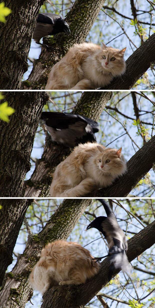 Самые наглые существа животного мира