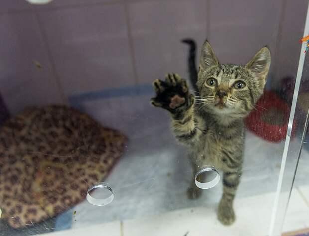 Эрмитажные коты ищут дом после пожара… И им смогли помочь!)