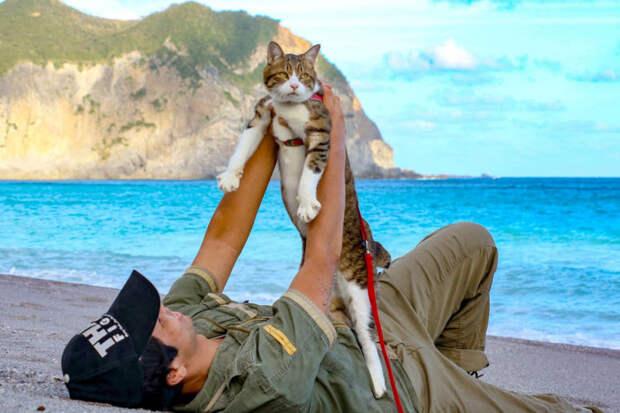 Кошки-путешественницы из Японии