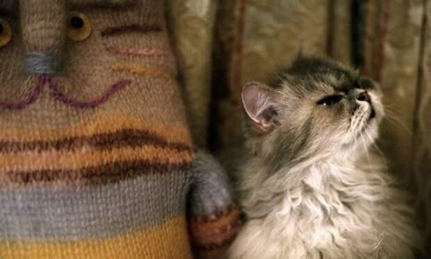 Кот обиделся: как найти с ним общий язык и помириться