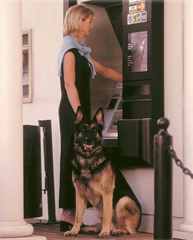 Личный телохранитель гордится своей работой Охранники, банкомат, безопасность, деньги, друзья человека, животные, охрана, собаки