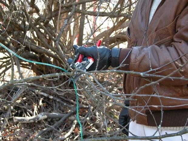 Секреты правильного ухода за жасмином осенью