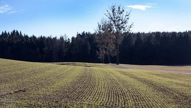 Подмосковье намерено увеличить объемы урожая озимых в 2020 году