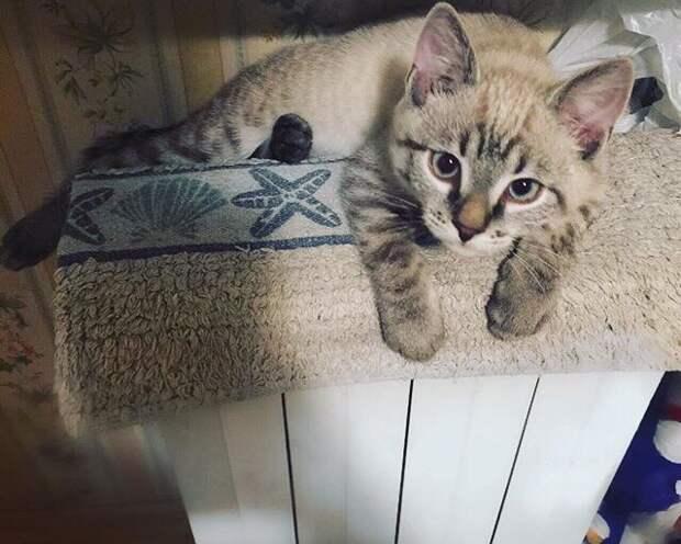 котенок лежит на радиаторе