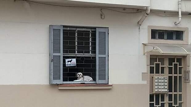 2. Осторожно, славный малыш! животные, кошка, прикол, собака, табличка, умора, юмор