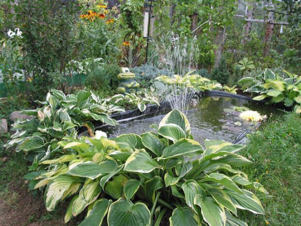 Букетный сад с его растительным изобилием - мечта начинающего садовода