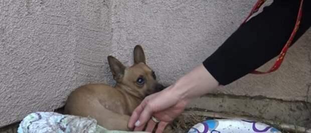 Когда исчезает доверие, остается только страх: крошечный щенок умирал в углу, но людям он больше не верил