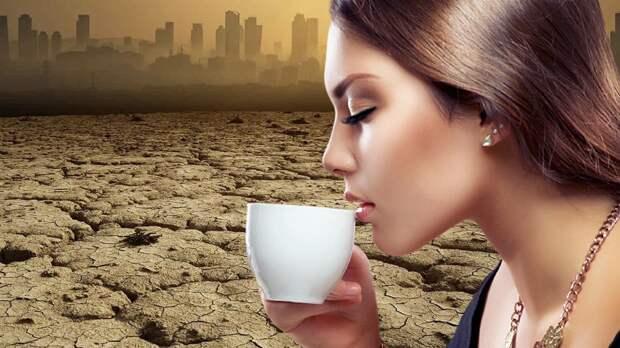 Производство элитных сортов кофе может пострадать от изменений климата