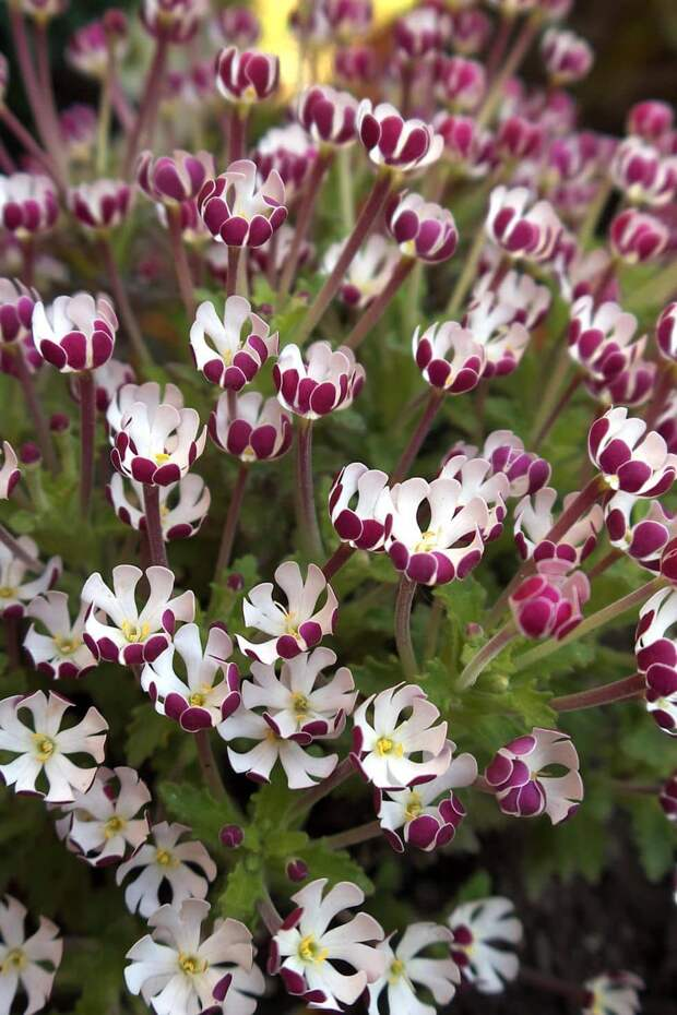 10 цветов, которые распускаются ночью и идеально подходят для сада