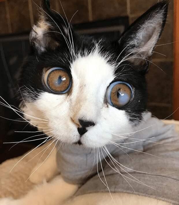 Большие глаза испуганно выглядывали из коробки. В ней сидел особенный котенок, которого бросили