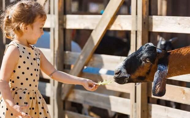 Каждый день будет посвящен определенным обитателям фермы/ mos.ru
