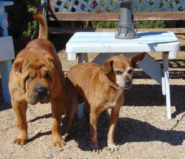 две собаки на прогулке