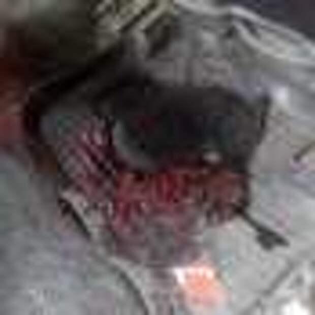 Луганск, улицы залиты кровью, десятки убитых и раненых — материалы для трибунала (фото/видео лента 18+)