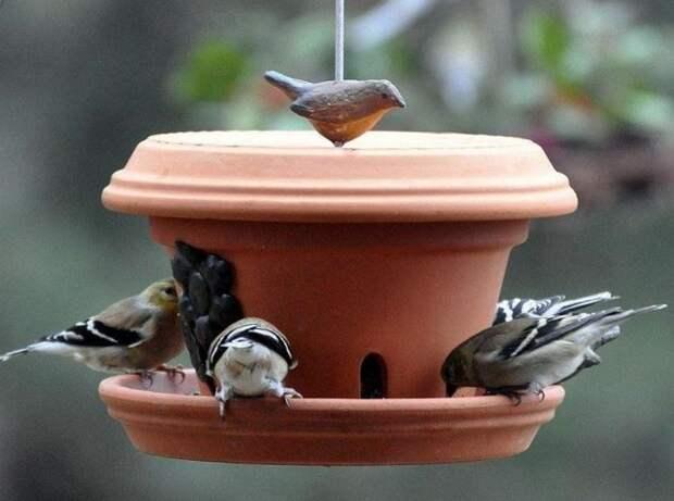 За птицами всегда приятно наблюдать. /Фото: pol-master.com