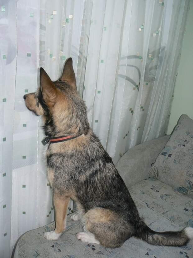 Сбежавшего из Отрадного в Бибирево пса продолжают искать хозяева