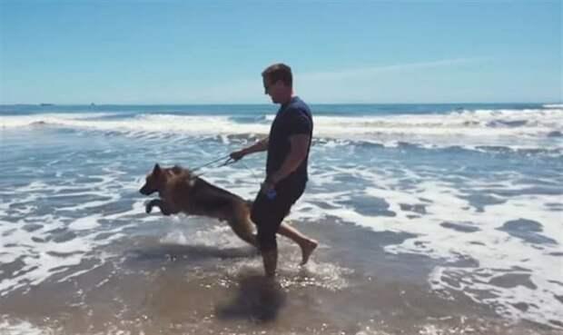 Большая часть жизни бедолаги прошла на цепи, но когда пес добрался до моря, он плакал, как ребенок