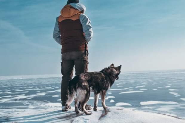 19. Трудные дороги часто ведут в красивые места жизненная позиция, жизнеутверждающие, канада, собаки, философия жизни, фото собак, фотограф, хаски