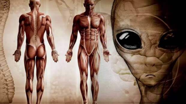 Человек: вершина мироздания или эксперимент пришельцев?