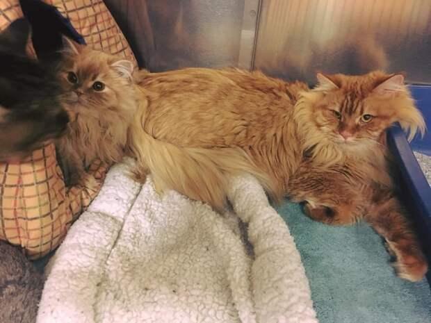 3 породистых кота были найдены у двери зоомагазина… с запиской! И вот что написал бывший владелец…