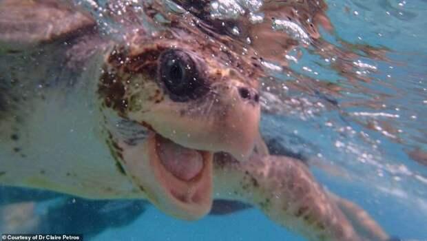 Ветеринар из Лондона приехала на Мальдивы спасать черепах