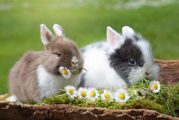 Как кролики чувствуют весну