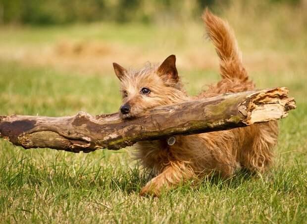 поведение собак значение