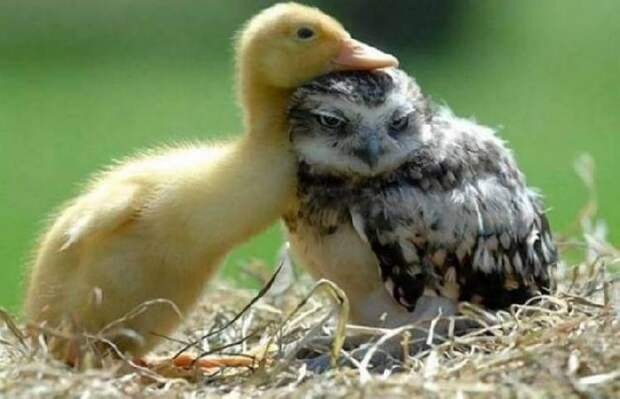 Самые нежные и трогательные «обижульки» животных