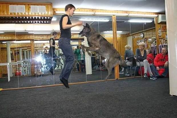 С волком в одном доме: семья приручила дикого зверя и теперь это настоящий член семьи