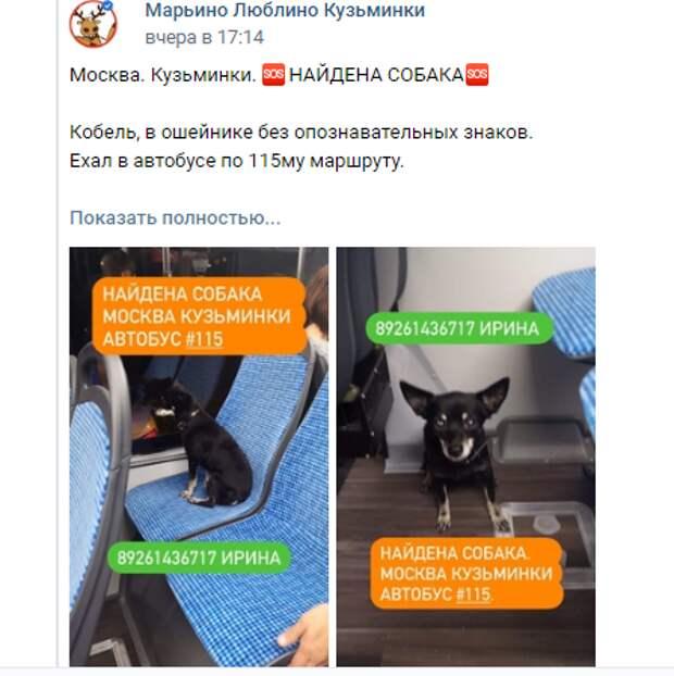 Собака-путешественница каталась на автобусе по Кузьминкам без хозяина