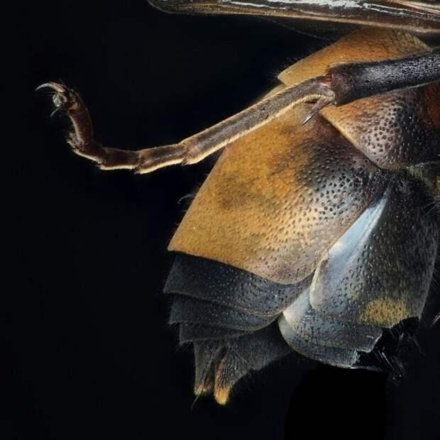 Нога пчелы