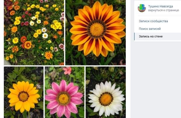 Фото дня: цветочное изобилие на Химкинском бульваре