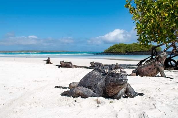 Tortuga Bay en la isla Santa Cruz   Turismo en Galápagos