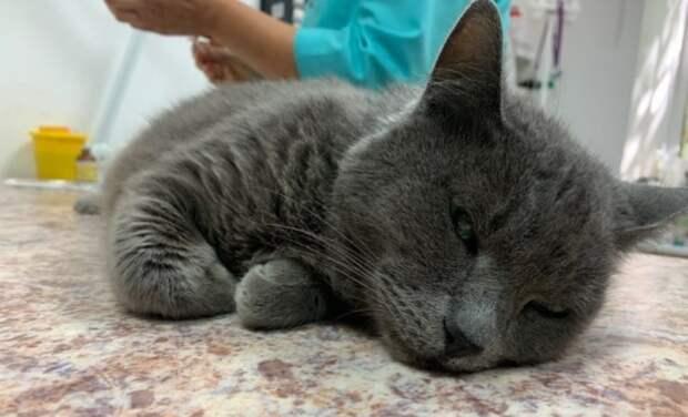 Подруги с Химкинского бульвара спасли кошку-«парашютистку»