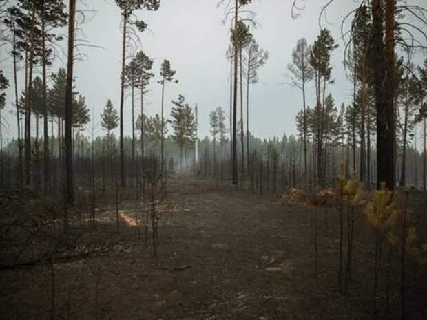 Забайкалье оказалось на 2 месте в ДФО по числу природных пожаров