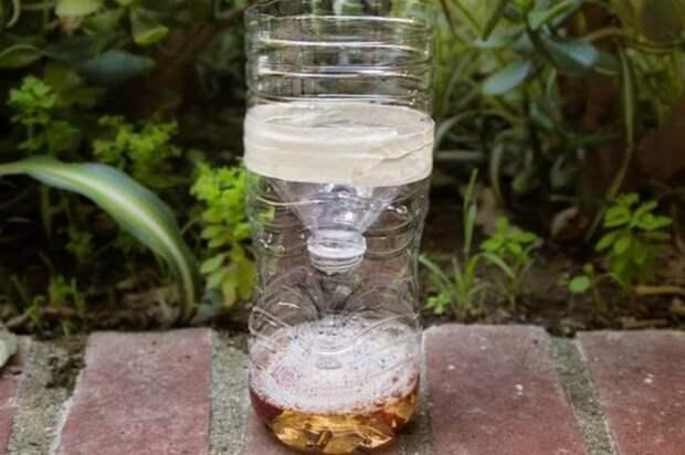 Поймайте насекомых с помощью сахара и бутылки. /Фото: pestkilled.com