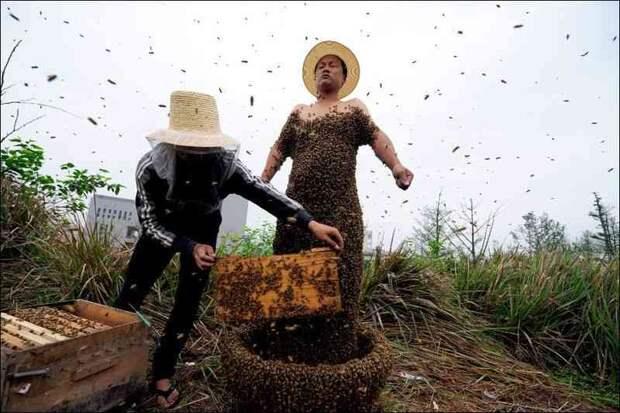 Ученые предполагают, что человек вероятнее всего походит от пчелы