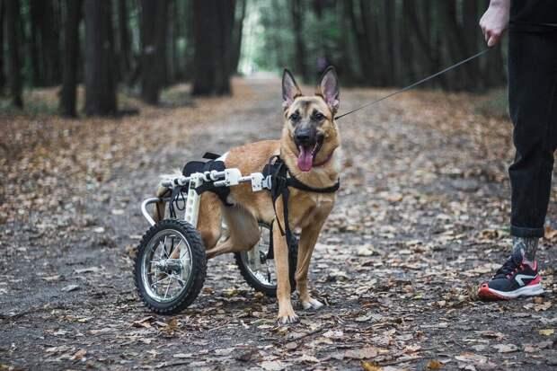 Этого щенка принесли в приют с пулевым ранением и вот как распорядилась судьба