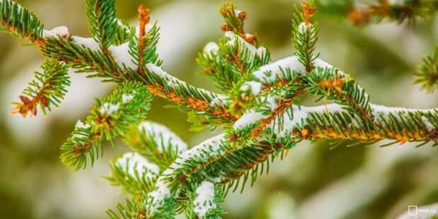Сдать новогоднюю ель можно в проезде Кадомцева до 20 февраля